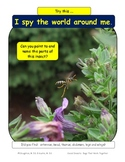 """Free activity: Insect Parts """"I Spy"""": Use as an interactive assessment"""