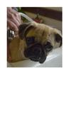 Free dog images