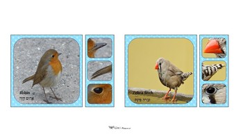 Free match birds game