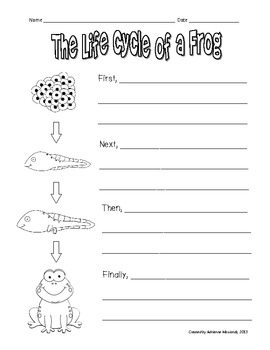 Frog Life Cycle Worksheets | Classroom themes | Pinterest