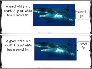 Freebie Sampler from Nonfiction Shark Unit