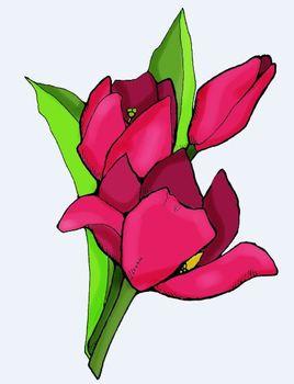 Clipart: Spring Tulip Daffodil Flower Singles by HeatherSArtwork