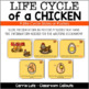 The Life Cycle of a Chicken Graphic Organizers and Writing Activities