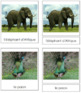 French - African Rainforest Animal Cards