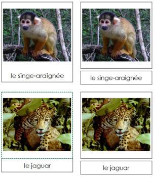 French - Amazon Rainforest Animal Cards