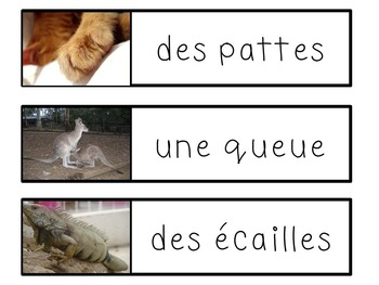 French Animal Adaptations - Les adaptations des animaux
