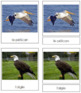 French - Bird Cards
