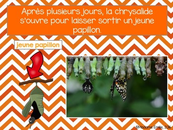 French Butterflies science unit/ Les papillons {sciences}
