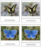 French - Butterfly Cards
