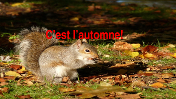 "French: Reading: ""C'est l'Automne!"", lecture, PRIMARY"