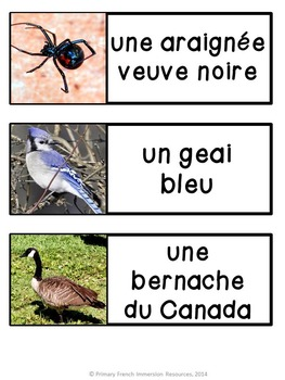 French - Canadian Animal Flashcards & Games - Les Animaux du Canada