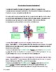 French Circulatory System (Board Game Project)