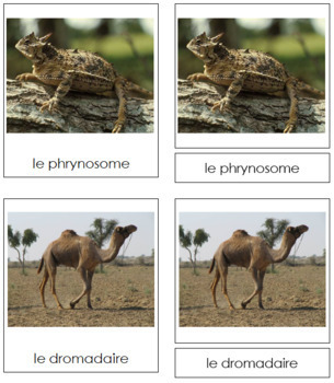 French - Desert Animal Cards