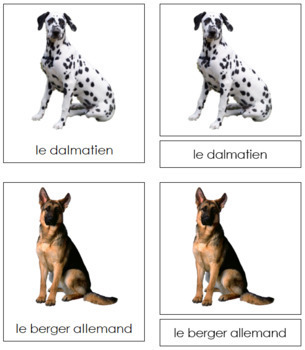 French - Dog Cards