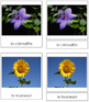 French - Flower Cards (Set 1)