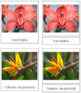 French - Flower Cards (Set 2)