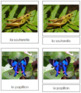 French - Insect Cards