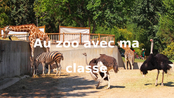 French: Reading: Les animaux/le zoo, lecture, PRIMAIRE