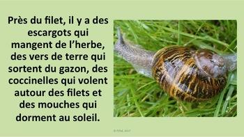 """French: """"Le printemps"""", Reading Bundle + activités, 4 textes, PRIM"""