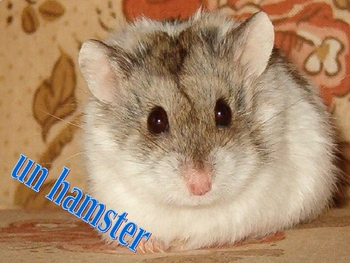 French Les Animaux Domestiques