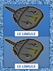 French: Les Animaux Marins