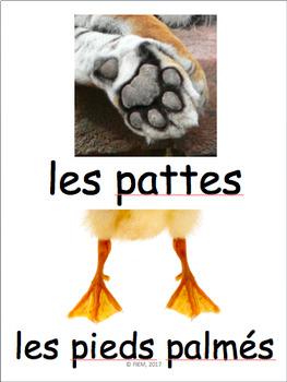 French: Les animaux, caractéristiques et classification Vocabulaire, Activités