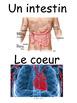 """French: """"Les systèmes du corps humain, Cartes éclairs/acti"""