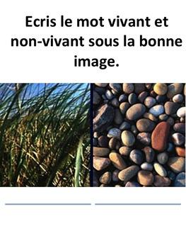 French: Les choses vivantes/non-vivantes, Cartes éclairs, FI, PRIMAIRE