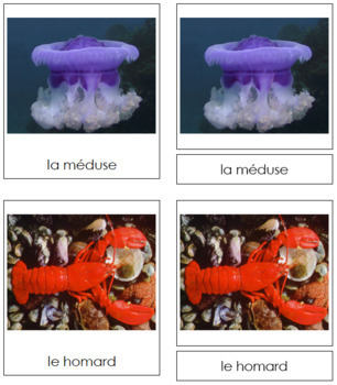 French - Marine Invertebrate Cards