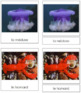 French - Marine Invertebrate Cards