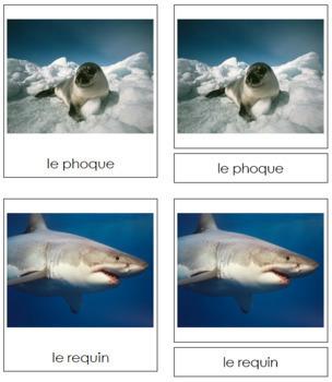 French - Marine Life Cards