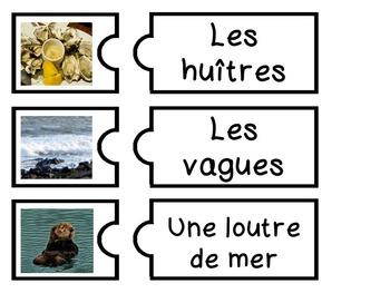 French Marine Life/Animals - Flashcards and games - La vie marine