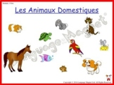 French Pets Presentation with Display Cards