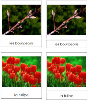 French - Spring Season Cards