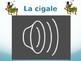 French TPRS La Cigale et La Fourmi