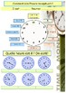 French Telling the time, quelle heure est-il? booklet for