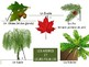 French Tree Identification (parts of a tree/tree types)  ~ Good Fall Lesson!
