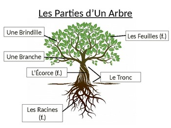 french tree identification parts of a treetree types good fall lesson