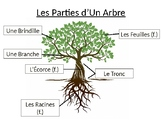 French Tree Identification (parts of a tree/tree types)  ~