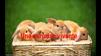 """French: Reading: """"Une surprise"""", lecture PRIMARY"""
