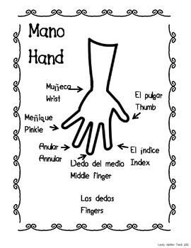 Spanish and English Body Parts