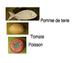 French - kitchen vocabulary words