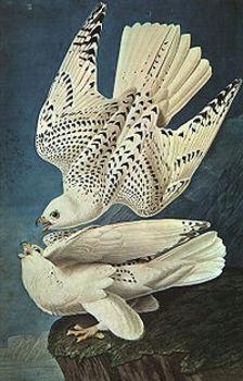French substitute lesson  plan John James Audubon