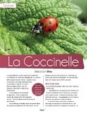 French text + activities + teacher's preparation: Ladybugs