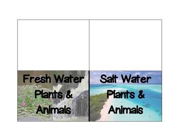 Fresh & Salt Water Sort