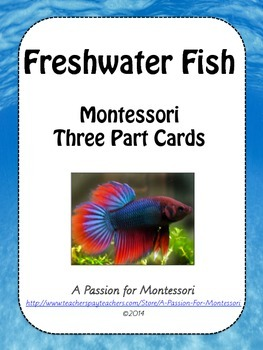 Freshwater Fish, 28 Montessori Three Part Cards