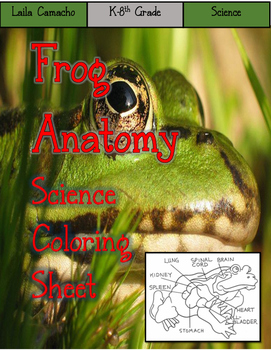 Frog Anatomy Craft