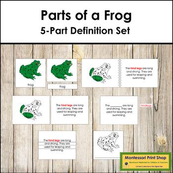 Frog Definition Set