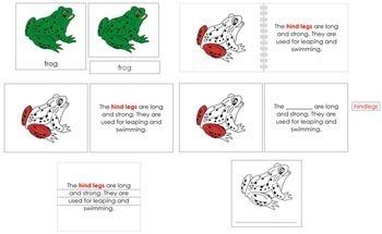 Frog Definition Set (Red)