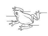 Frog Diagram